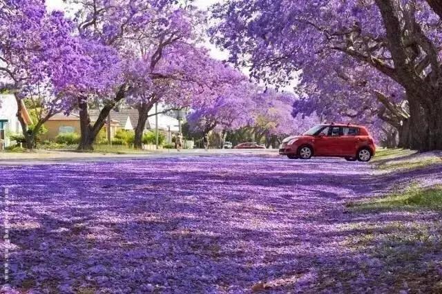 在澳大利亚有一个坐落在新南威尔士和昆士兰交界的小镇叫Grafton