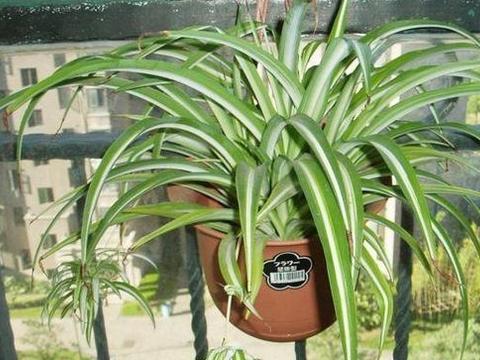 """养花还的""""蚯蚓粪"""",比肥料都好用,埋进花土中,植物吸收长得快"""