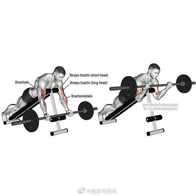 肱二头肌训练常规动作,让手臂撑爆你的袖口!