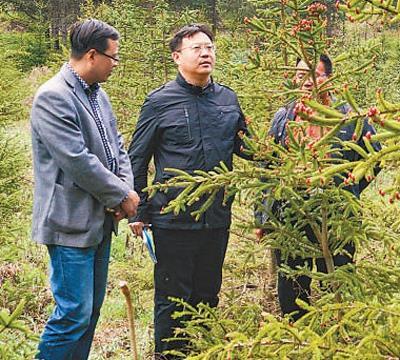 中国林科院研究员王军辉——孜孜育种 愿杉林葱茏
