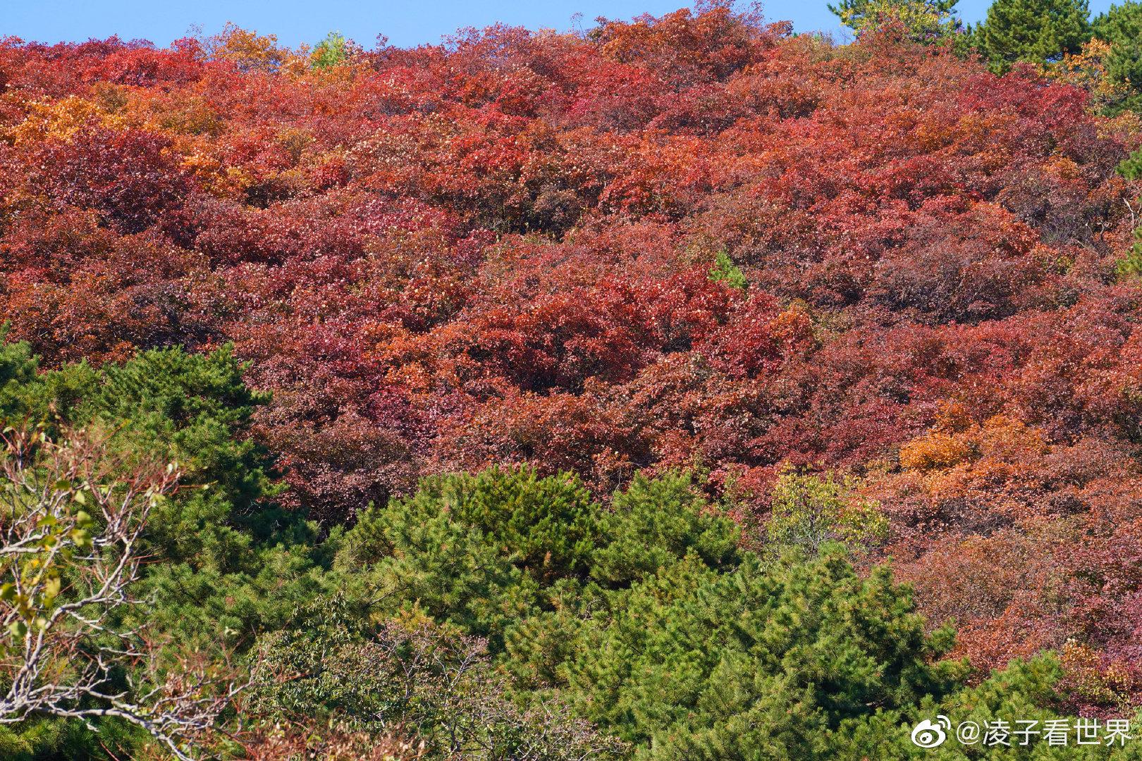 金秋十月清凉谷已经到了赏秋色的最好时候