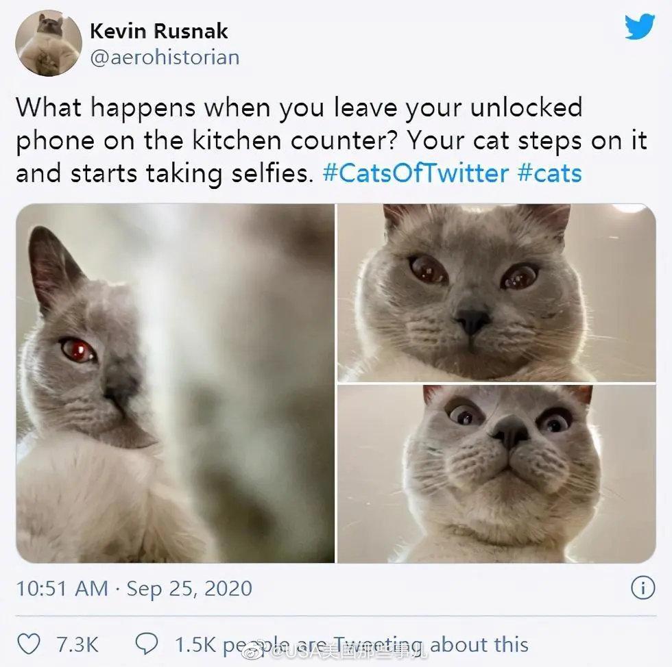 """美国俄亥俄州一铲屎官在社交媒体上分享了一组自家猫咪的""""自拍照"""""""