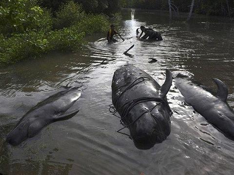 村边河里出现一条鲸鱼,知道真相愤怒不已!