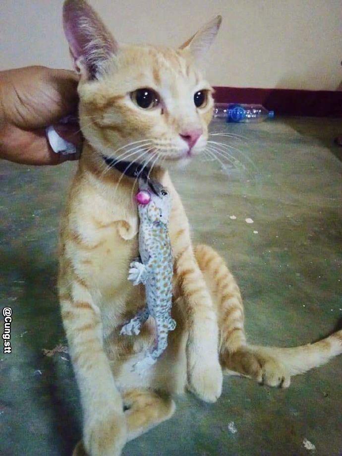 猫脖子上挂着奇怪的东西,主人走近一看