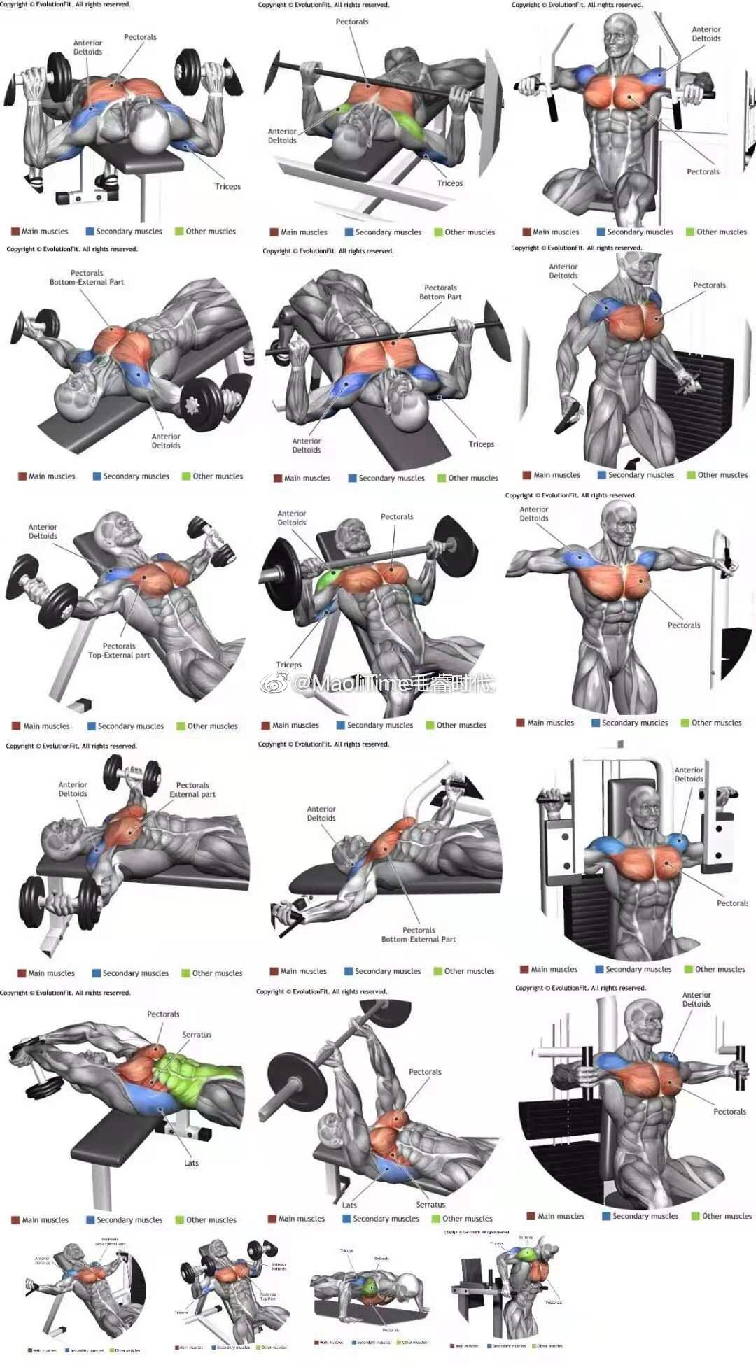 毛睿干货!超全肌肉训练动作图解!涵盖全身所有部位!莱维贝贝!!