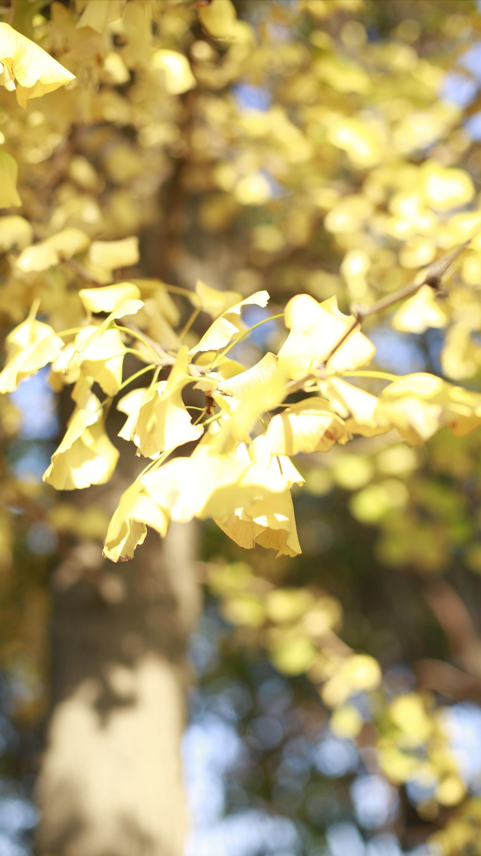 """""""一年好景君须记,最是橙黄橘绿时。""""摄影@畔口占"""