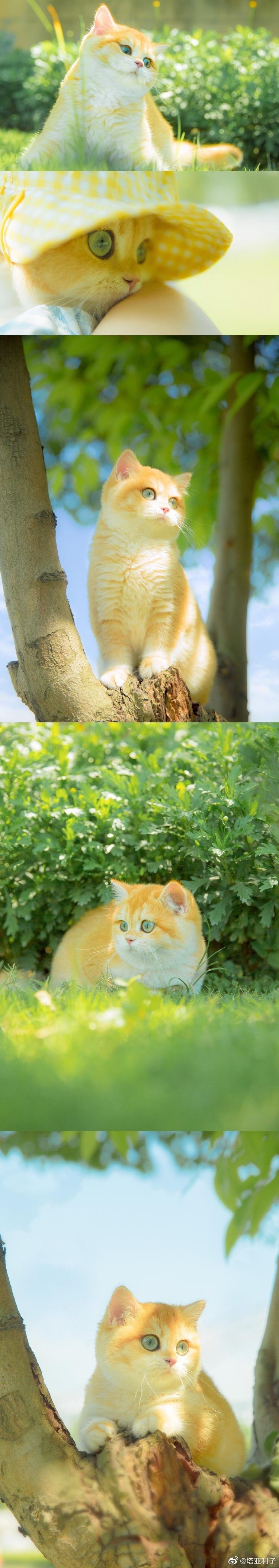 《迪士尼在逃公主猫》 📷:@塔亚利子
