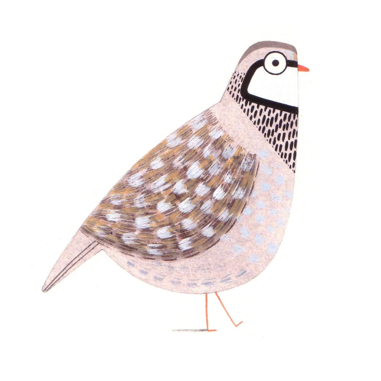 英国插画家的小动物合辑作者: Christine Pym