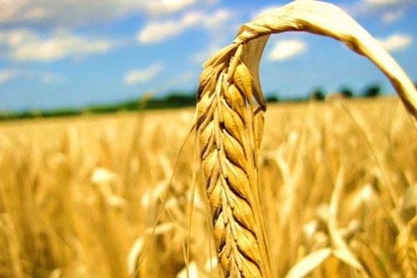 我市切实保障主要农产品有效供给
