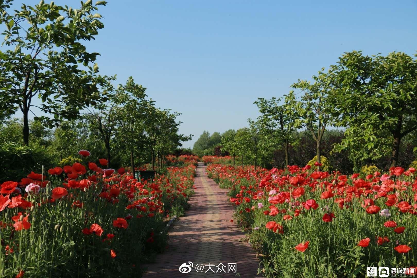 菏泽市东明黄河国家湿地公园已形成典型的河流湿地生态系统