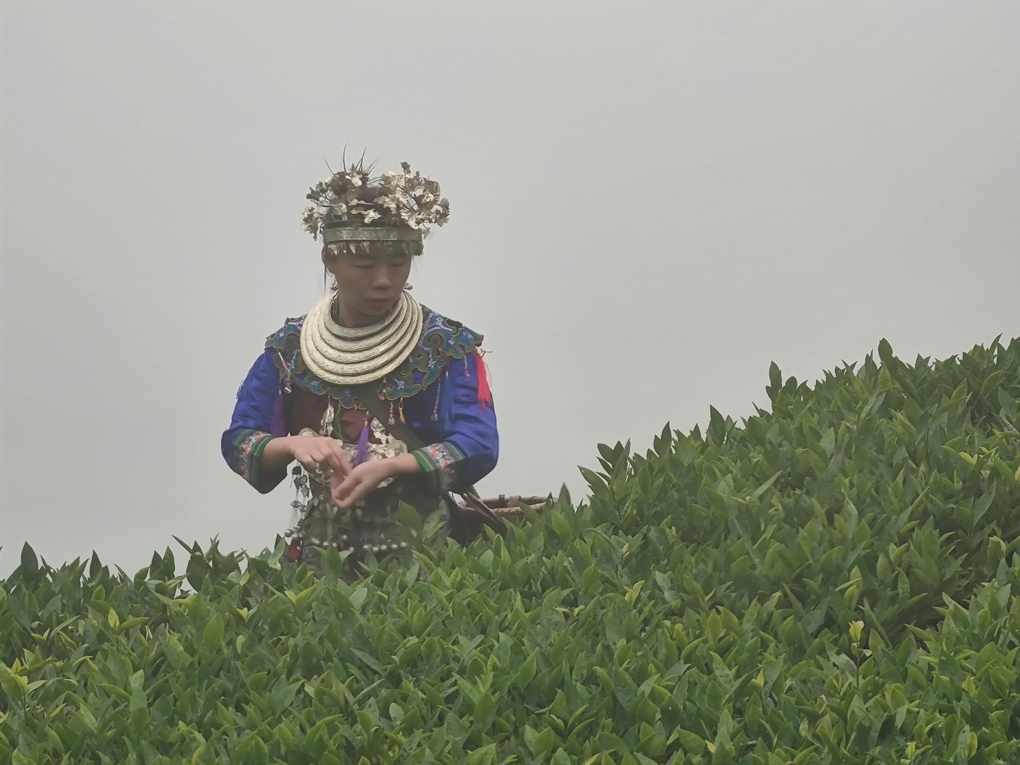 这里是共和国大将粟裕的故乡,这里是中国茶乡,这里是侗族