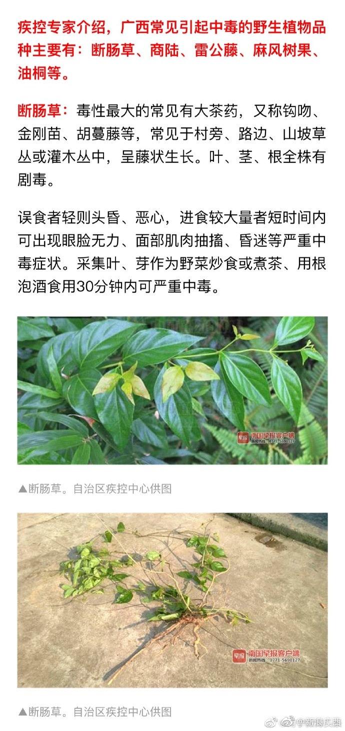 广西疾控专家警示:清明期间这件事千万别做,严重可致命