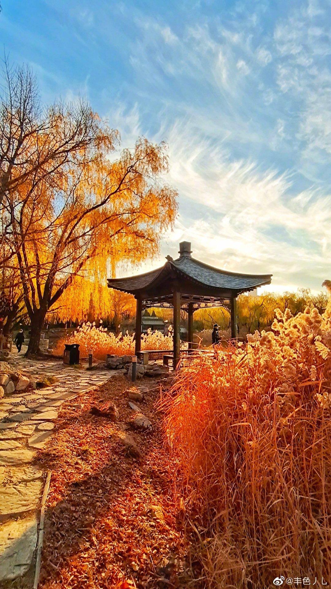 初冬的北京柳荫公园,深秋景色依旧在 摄影@丰色丿乚