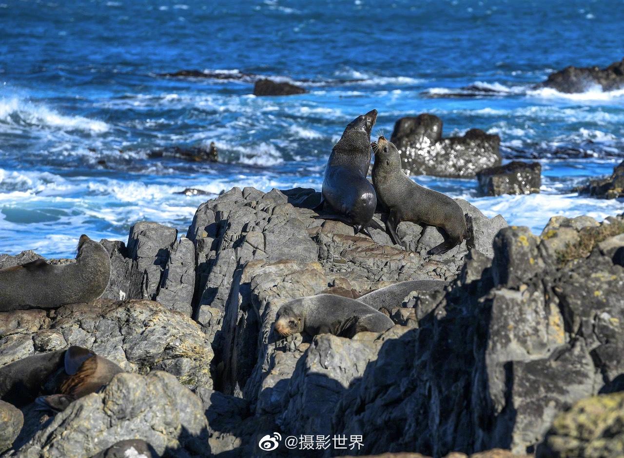 摄影师郭磊镜头下的新西兰,堪称野生动物的世外桃源。