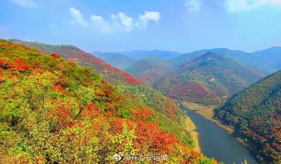 近日,山西运城平陆大河庙,伴随浓浓的秋意,漫山遍野的红叶似彩霞