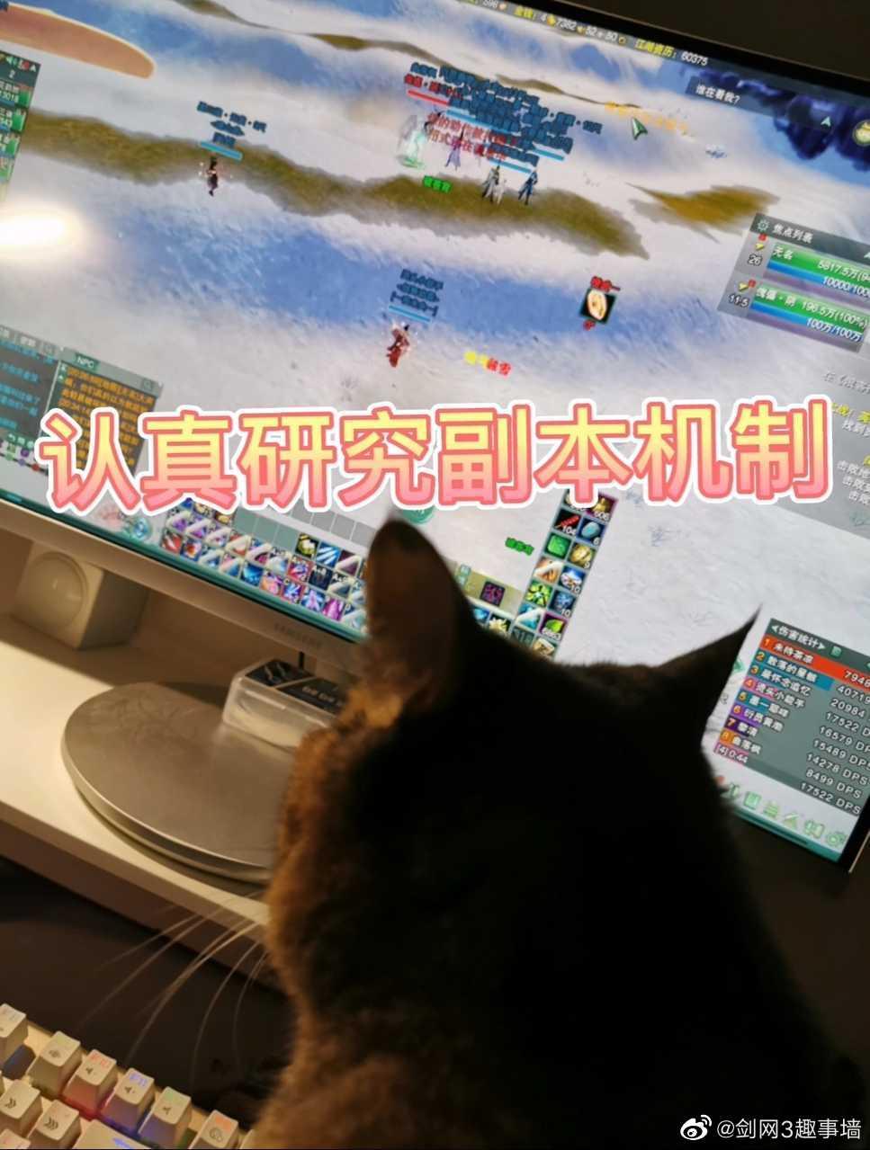 墙哥,忍不住投稿我家的猫,昨天打本它妄图对着麦克风进行指挥