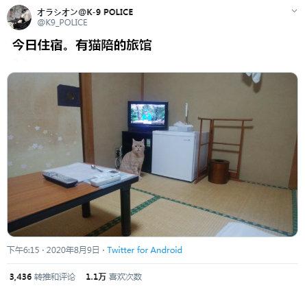 推主订了一家旅馆,客房里还有猫咪陪伴!by/twitter/K9_POLICE