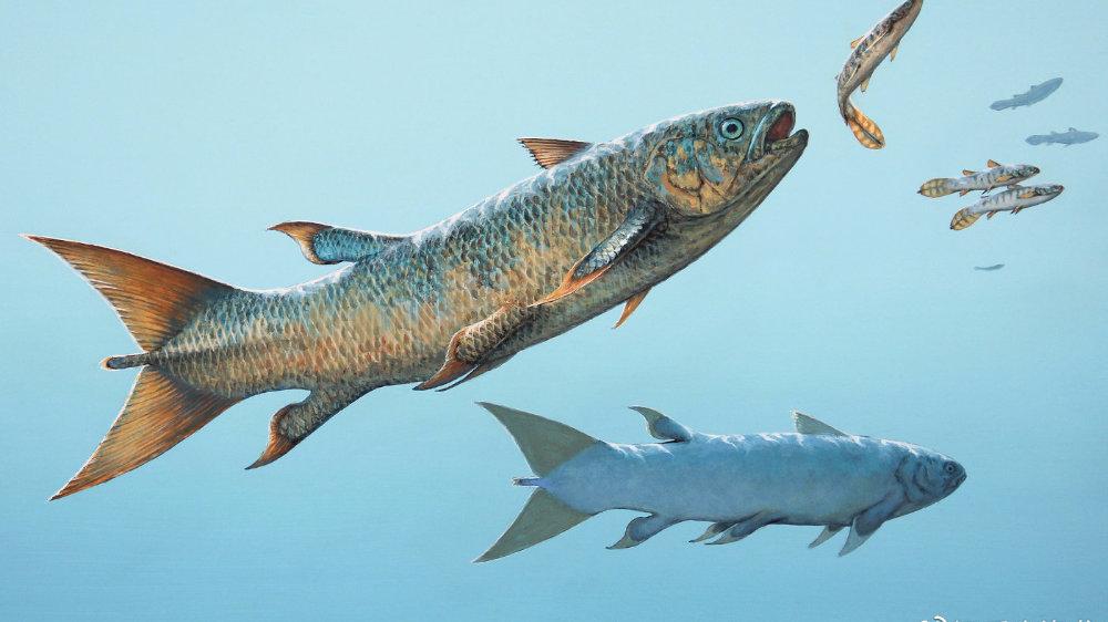 """叛逆腔棘鱼:三叠纪海洋中的""""反叛者"""""""