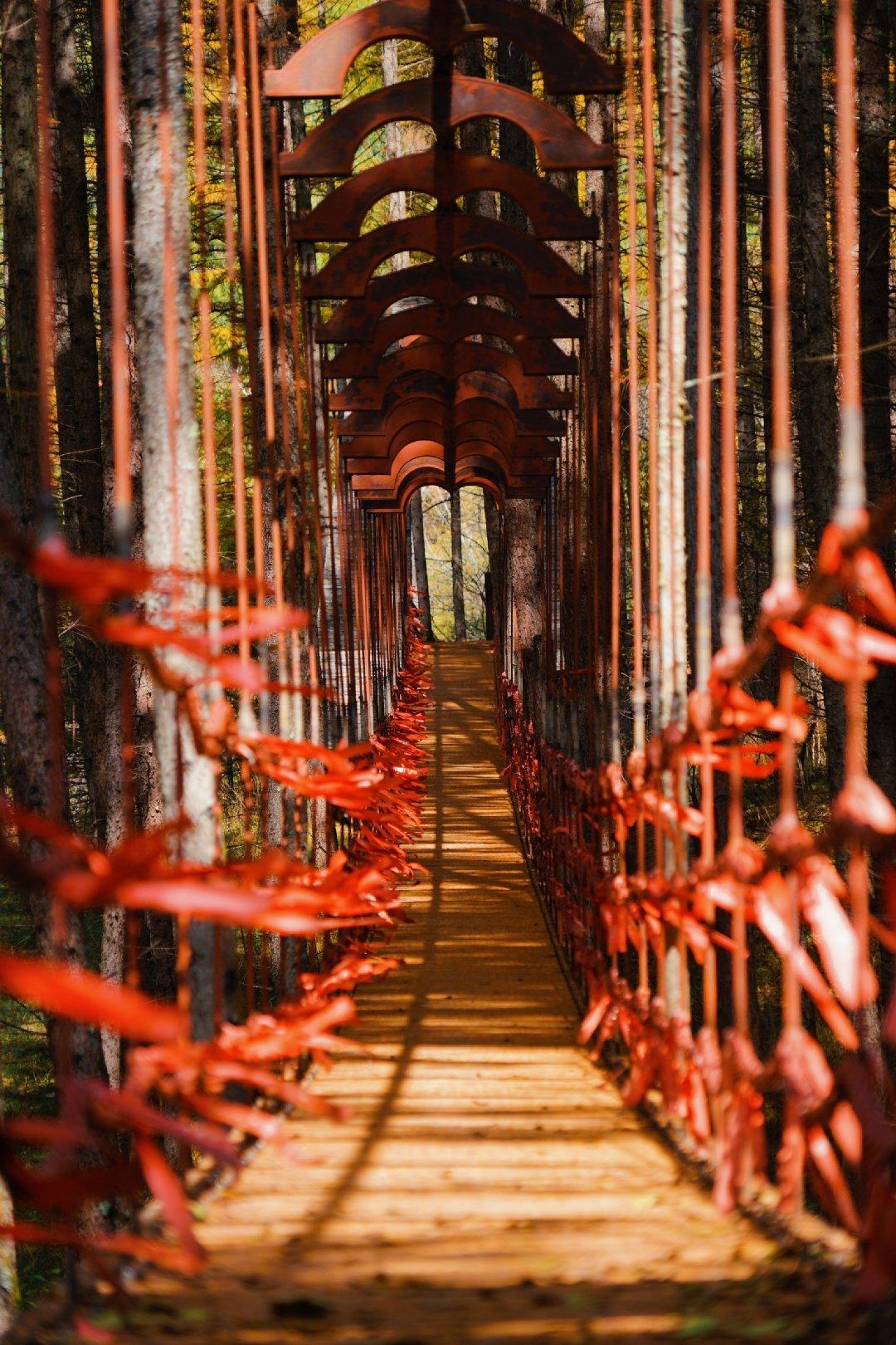 秋天的色彩斑斓是让人喜欢这个季节的众多原因之一,不管是红色