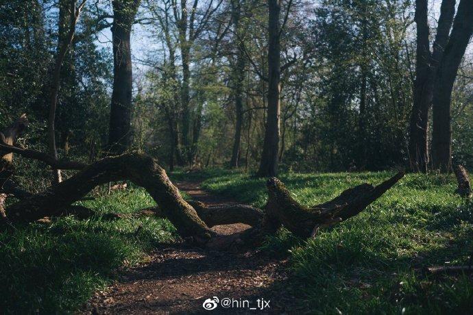 想对那个人说 树林很安静 太阳很好 我也很好推荐@hin_tjx