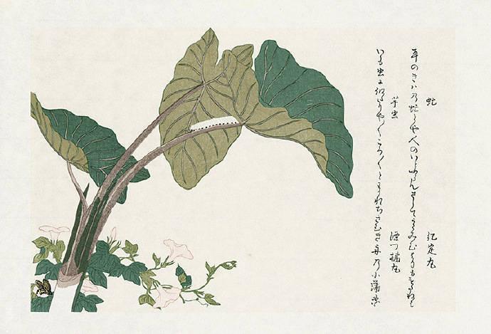 《昆虫书》1788年浮世绘大师喜多川歌麿 绘制
