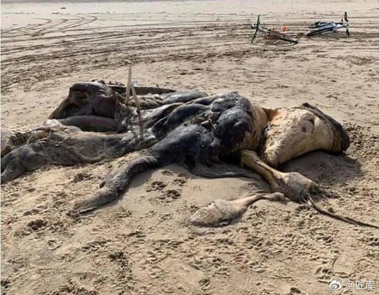 《每日邮报》报道说,英国默西塞德郡岸边出现了诡异的生物遗体