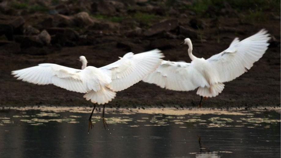 安徽多措并举保护生物多样性
