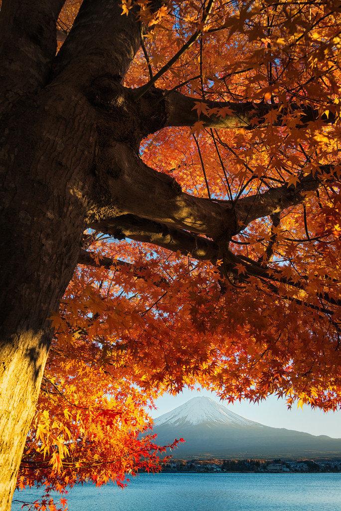 没有一个季节比得上秋天的富士山更诱人,无人不醉,无人入睡!