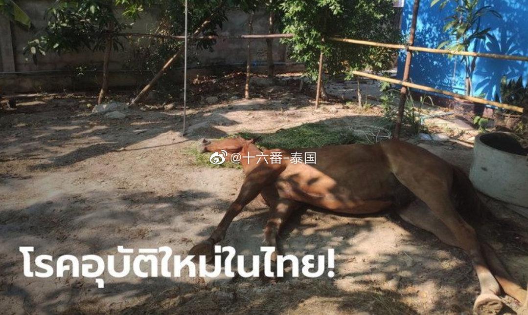 非洲马瘟致华欣十匹观光马死亡,尚无证据表明会感染人