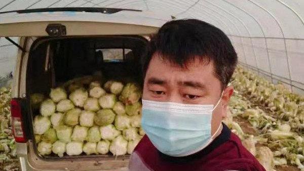 """""""我的白菜,只捐不卖"""" 新乐全国劳模 5 万斤白菜送到一线防疫单位"""