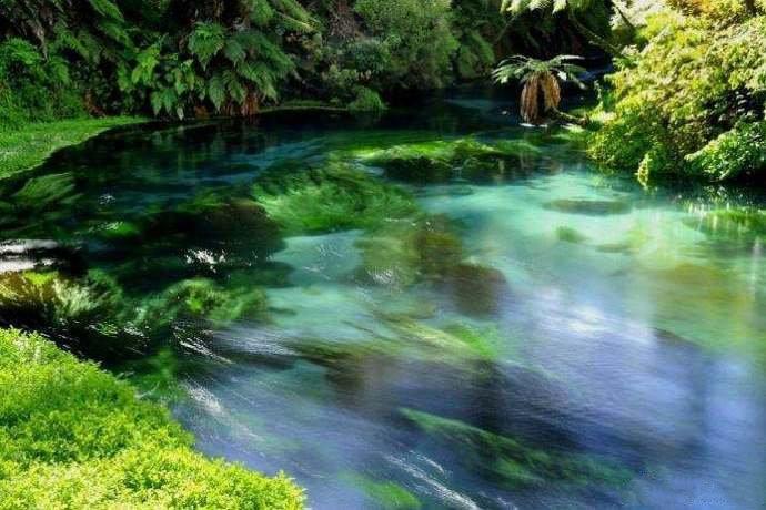 新西兰北岛中部,蓝色泉水与绿植交相辉映。