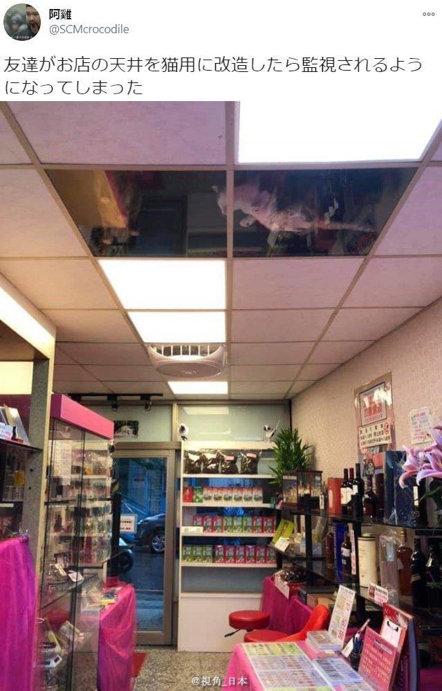 趣闻:把天花板换成透明后店里就多了好几台猫监控w