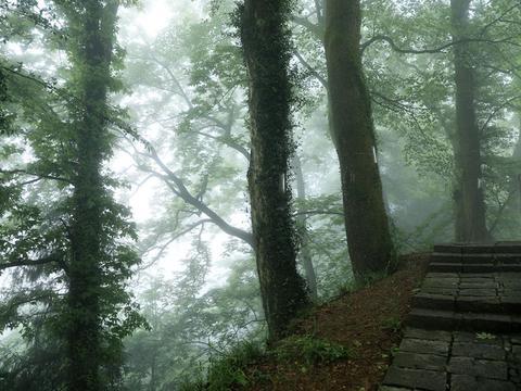宁波已发现十处古树群,有风景也有历史,乡村旅游目的地