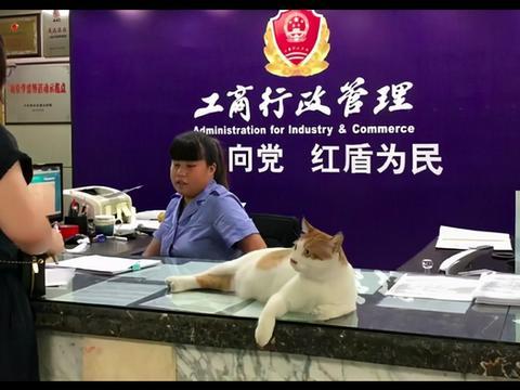 流浪猫被抱到工商所,凭着捉鼠和调解纠纷,一路开挂成为了公务员