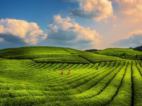 《贵在有理》贵州样板系列六:当农业插上科技的翅膀