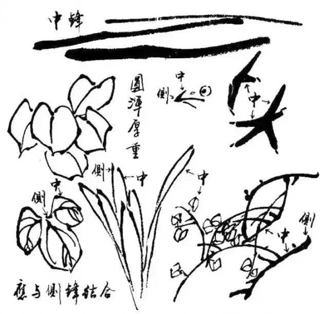 写意花鸟画用笔和用墨技法3.1)……