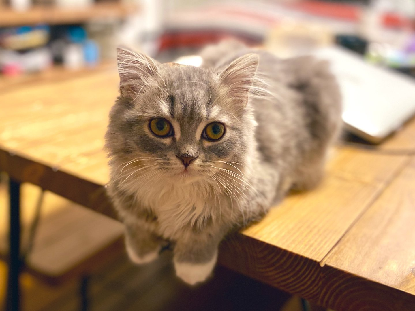 啊啊啊啊啊啊啊!小短腿!by/twitter/alma20191228