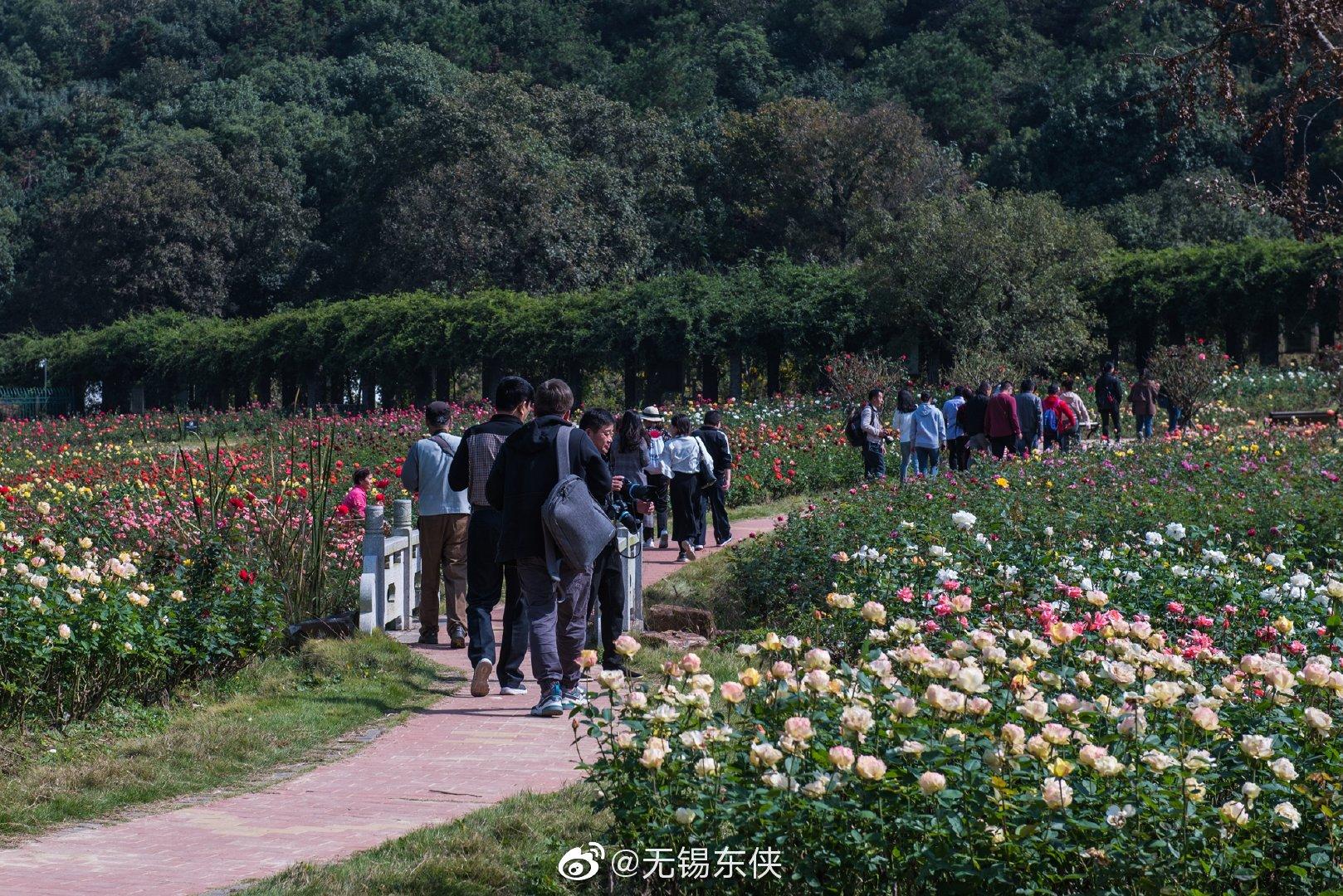 大浮山中又是繁花似锦。龙寺生态园的月季花海