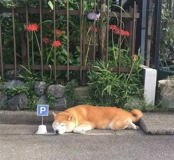 阿柴的专属停车位~哈哈哈哈~主人真是有心了