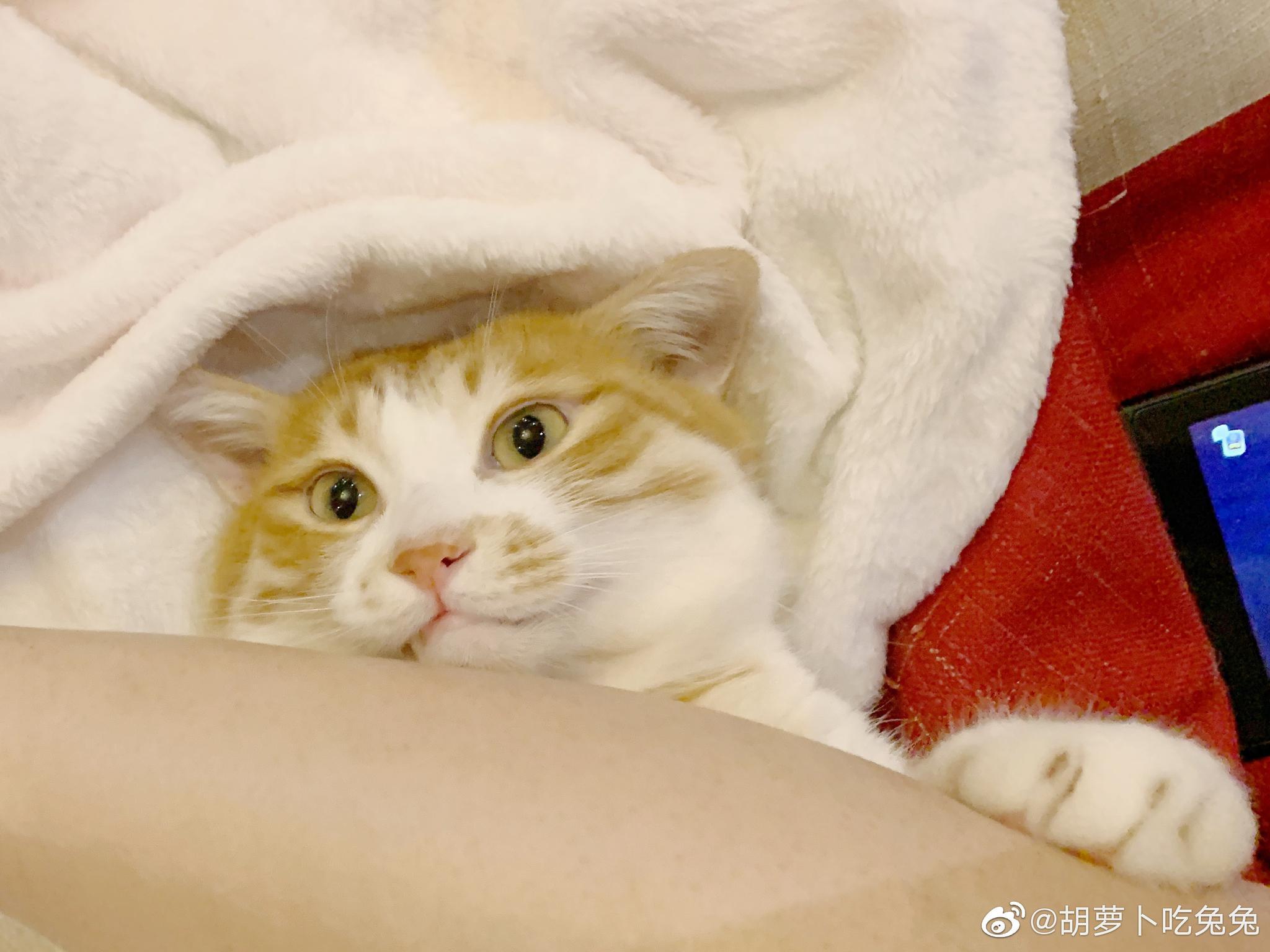 新入的jio垫,舒服,就是充电麻烦,电量低的时候噪音大。