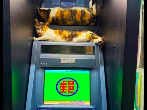 猫咪趴在取款机上睡觉,网友都不敢过去取钱了,猫:先装睡再打劫