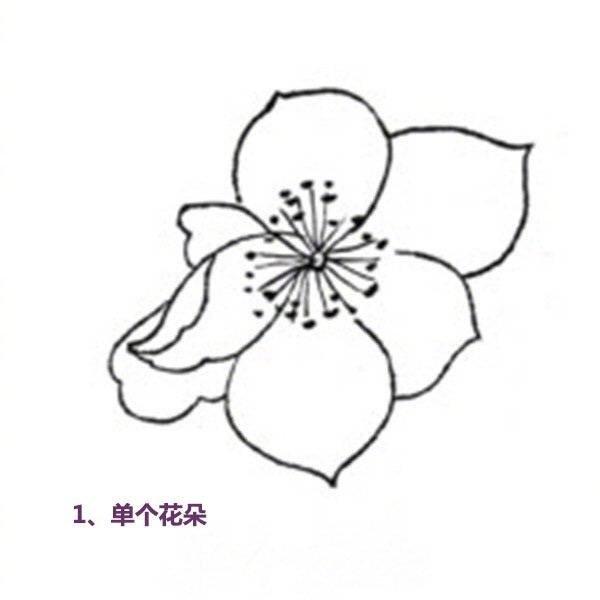 国画技法:杏花蝴蝶白描手法步骤教程