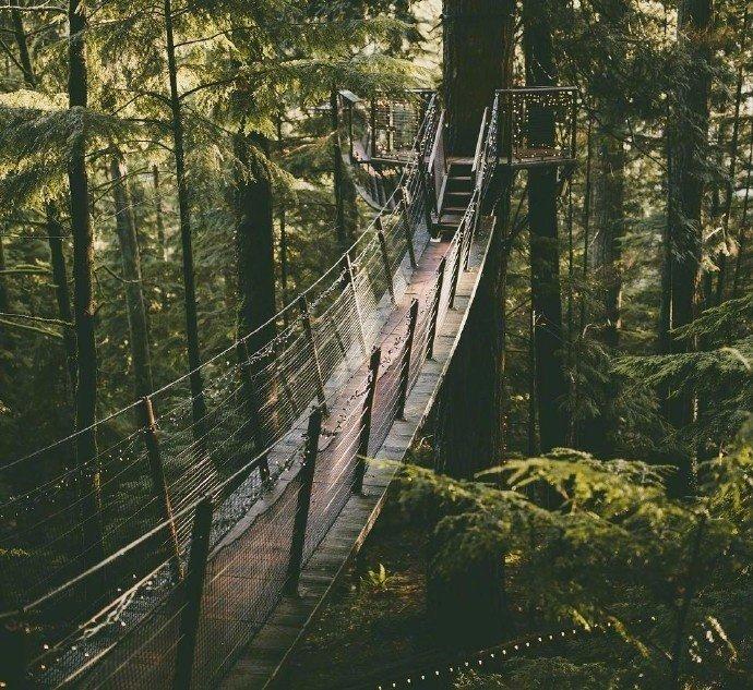 温哥华的卡皮拉诺吊桥,好想走一走,穿梭在自然之中。