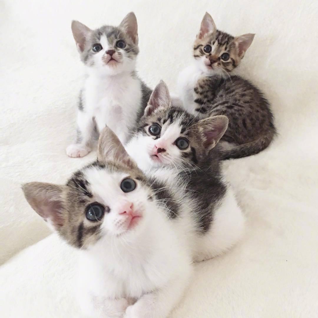 可以去你家吃饭吗?鱼汤拌猫粮就行。