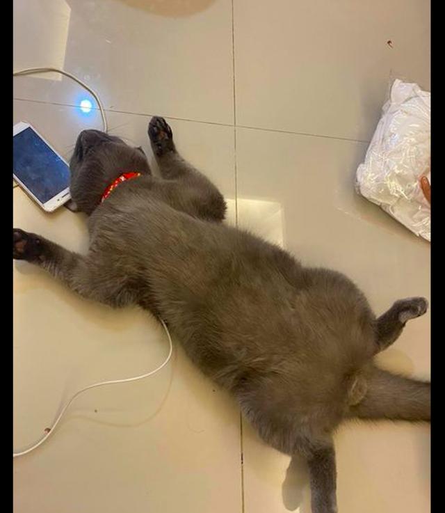 猫咪四脚朝天睡觉,主人把快递放在它身上也不醒,安全感十足啊!