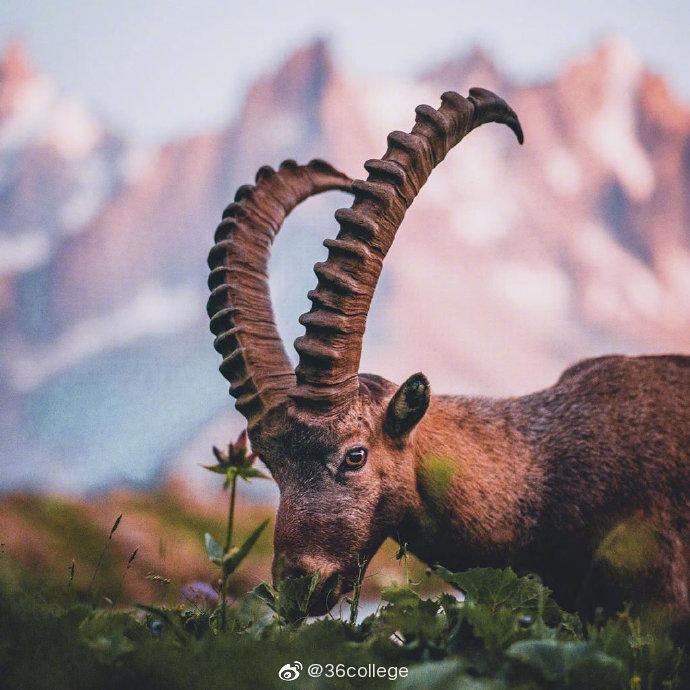 九月的法国勃朗峰 Chamonix France