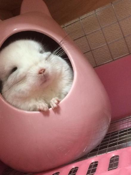推友们给家里的小宠物们准备的龙猫壶,钻进去睡觉时简直萌哭了