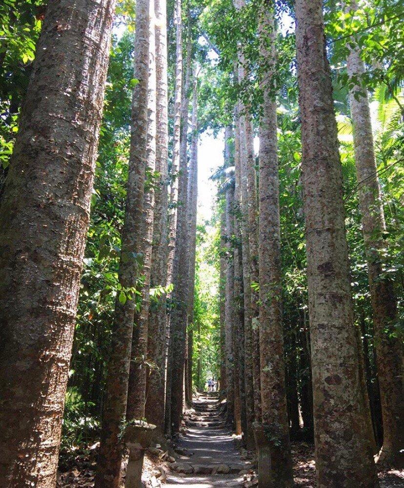 帕罗尼拉公园——隐藏在凯恩斯南部的一片绿色