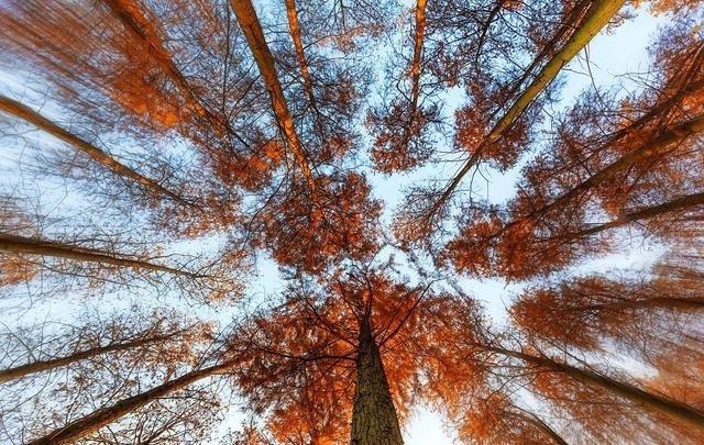 看看古人笔下美到极致的秋天
