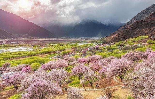 西藏小江南——林芝,在那桃花盛开的地方